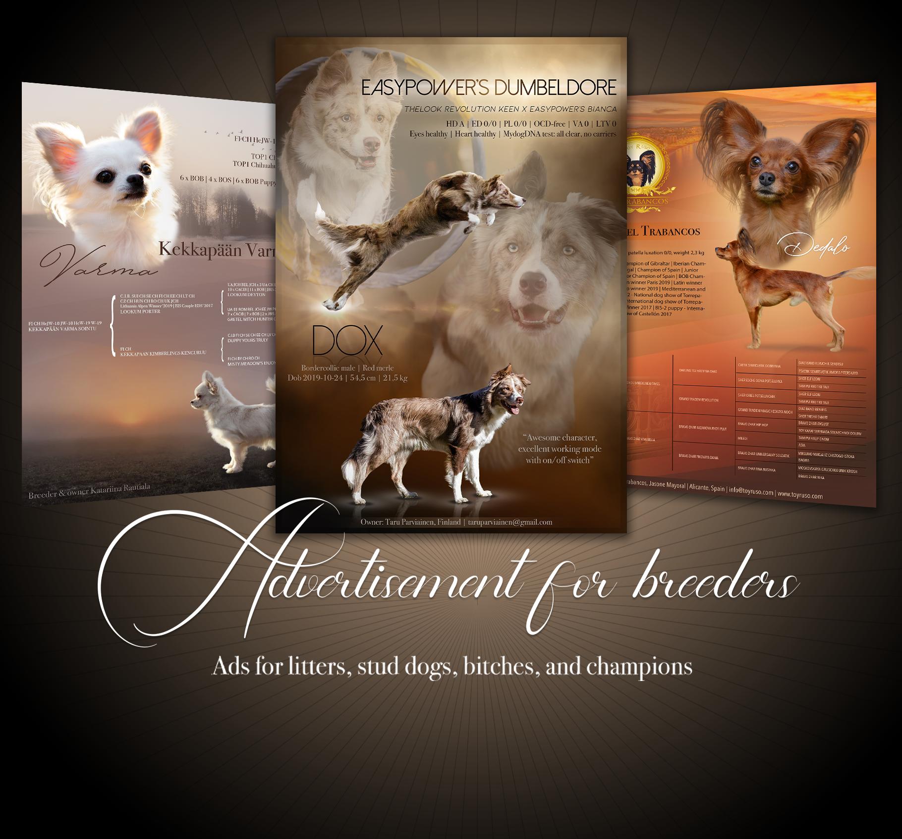Graphic litter, stud dog, bitch, or champion advert - web version